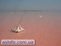 Озеро Сиваш. Розовая рапа