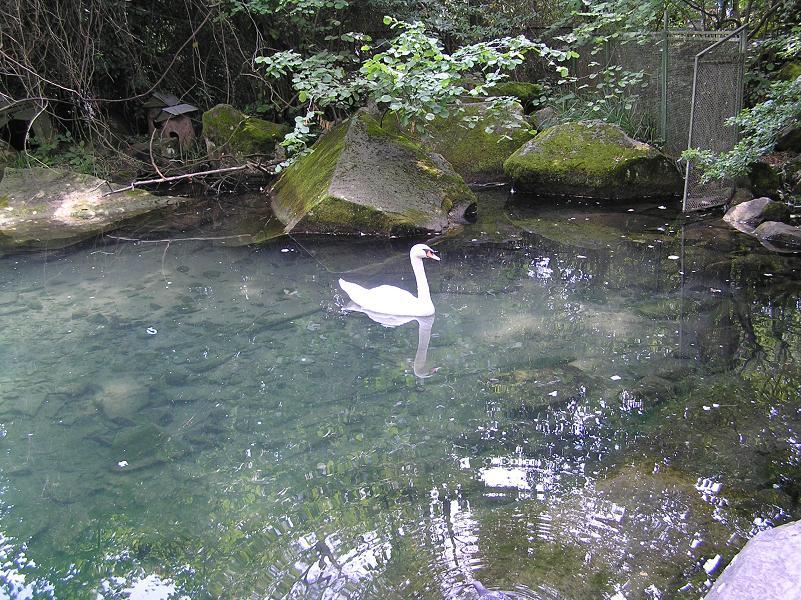 Лебедь (Воронц.дв.)