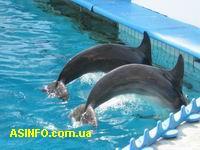 Дельфинарий. Фото дня
