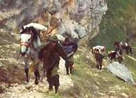 Многодневный конный поход