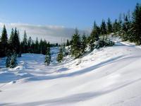 Горные лыжи. Карпаты.