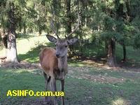 Вольеры с оленями и косулями