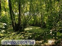 Волыжин лес