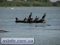 Вилково. Устье Дуная. Фото дня